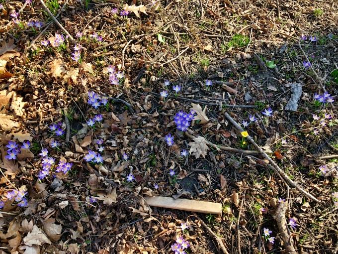 prospect-park-spring